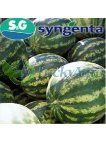Crimson Sweet Syngenta